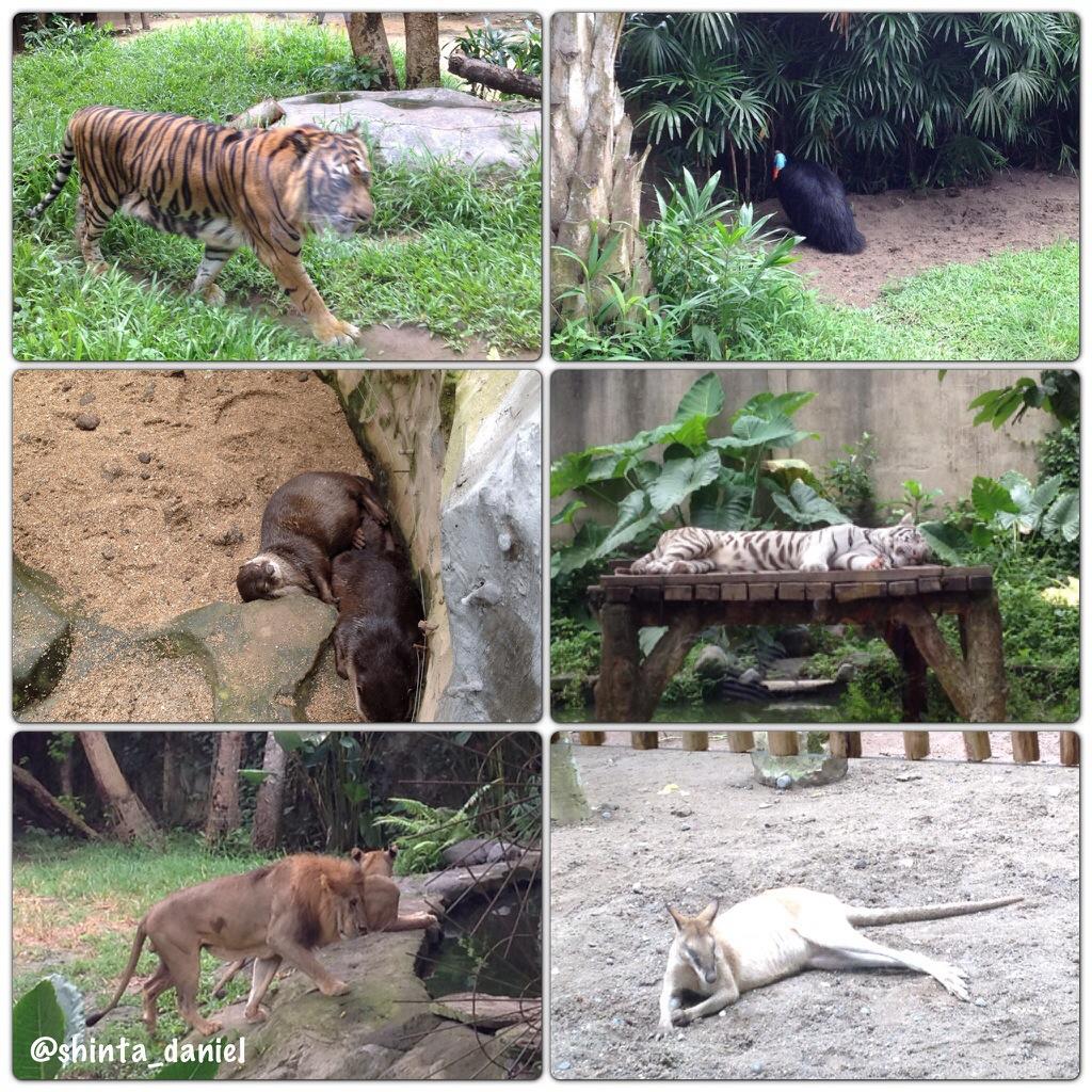 Bali Des 13 I Bali Zoo Rawcktobers Story